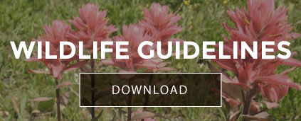 wildlife-guidelines