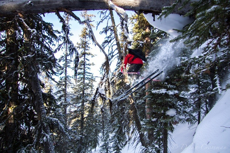 Winter_TreeSkiing