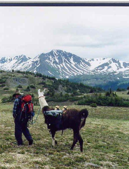 Summer-llama-hiking-2
