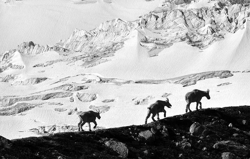 Sorcerer-Lodge-Summer-Tired-Goats