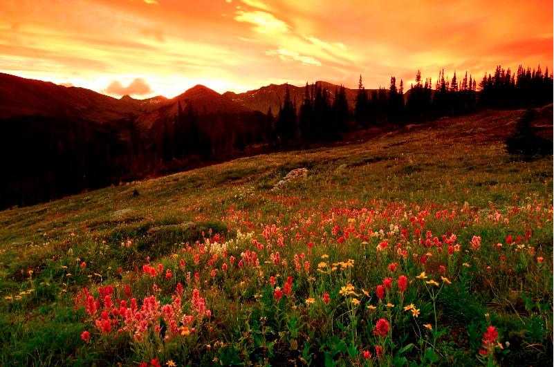 Sunset+flowers