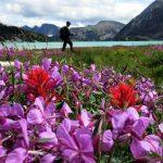 BLBCA_Sorcerer_Wildflower_Blog3