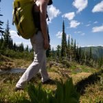 backcountry, hiking, flora, Valhalla Mountain Touring