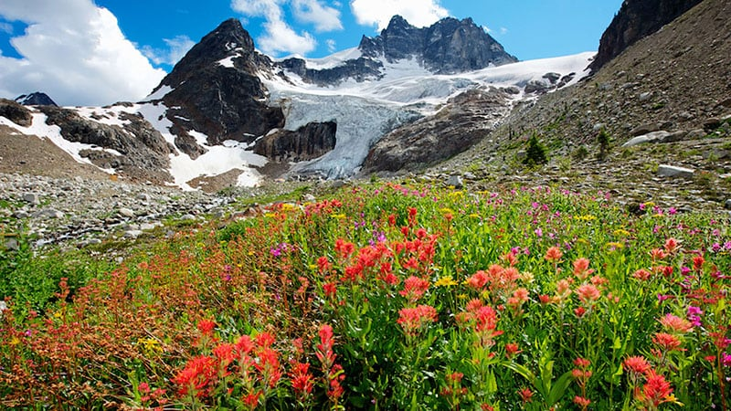 Flowers on a mountain slope